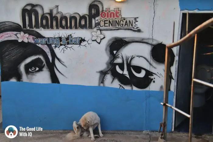Mahana Point - Cute doggies we've met on our travels