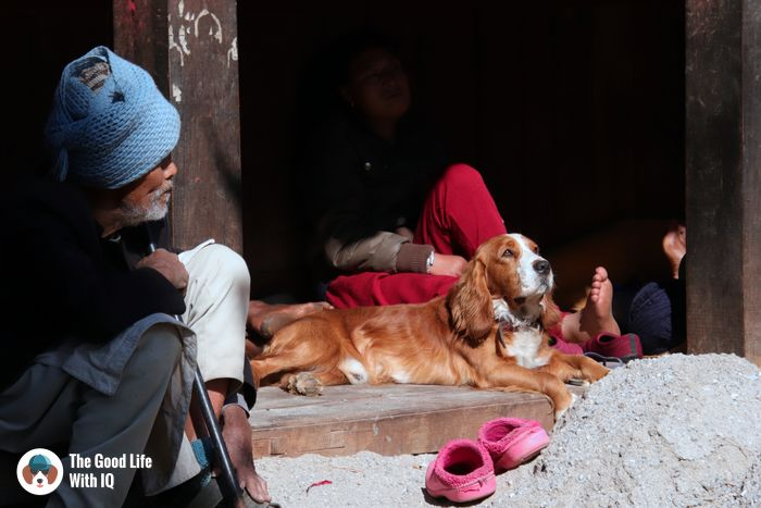 Bhaktapur - Cute doggies we've met on our travels