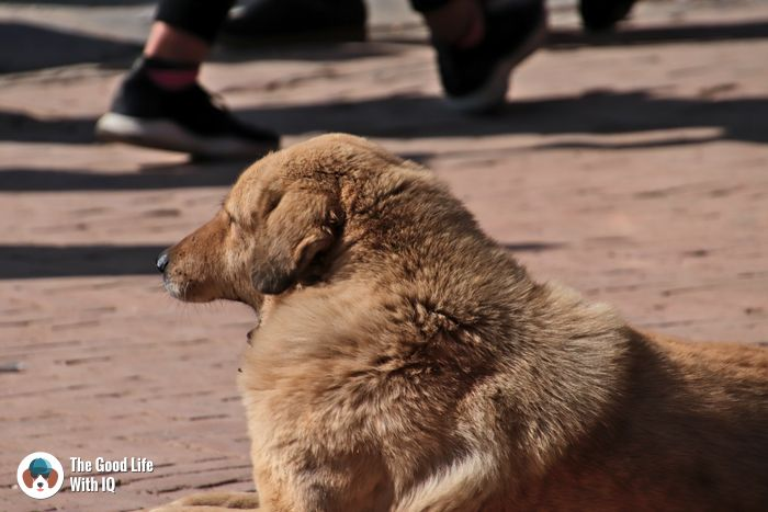 Boudhanath stupa - Cute doggies we've met on our travels