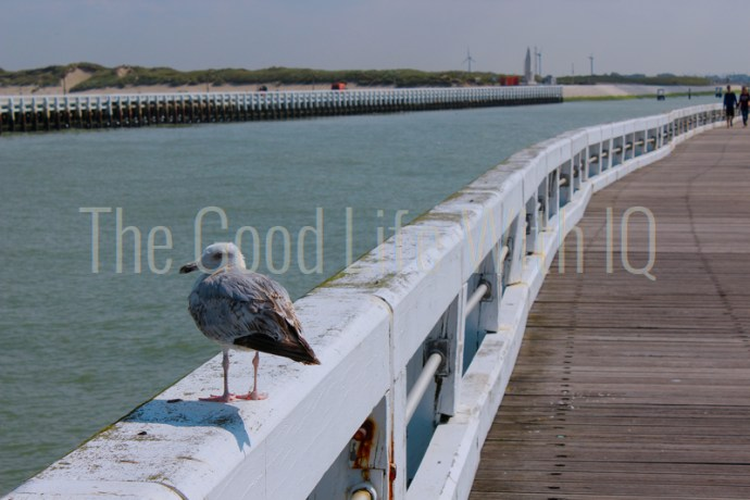A seagull sitting on a pier at Nieuwpoort, Belgium