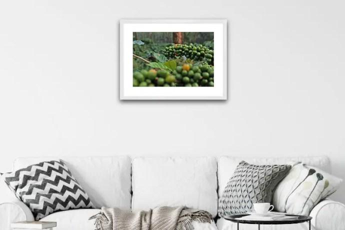 Unripe coffee berries in a plantation in Coorg, Karnataka, India