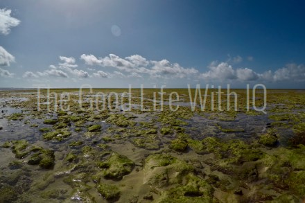 Exposed reef at low tide in Malindi Marine National Park