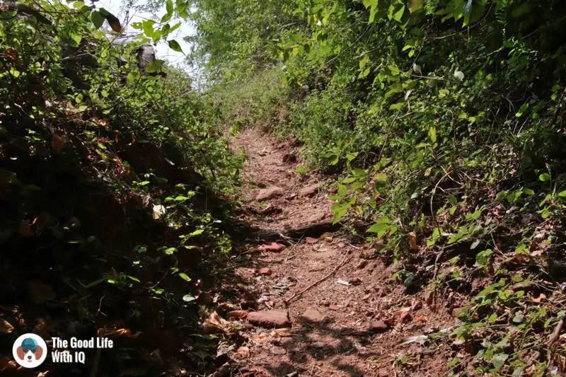 Arikamedu - Path with bricks and pottery