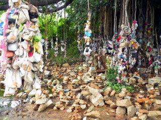 A banyan tree with good luck charms tied to it by passing worshippers