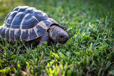 Charming tortoise