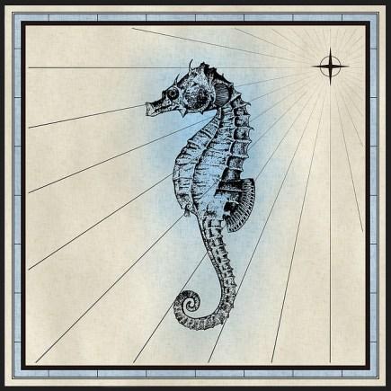 Seahorse myths