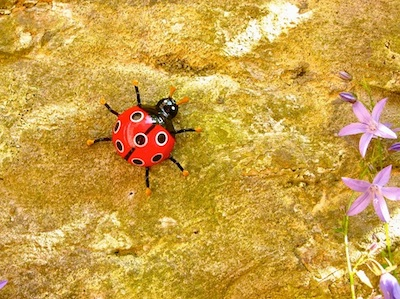 Ladybird - symbolic of luck
