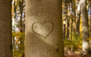 The heart symbolises romance