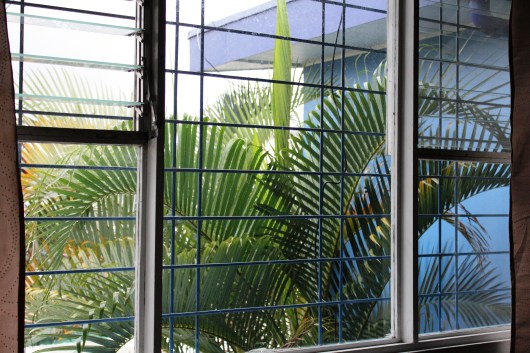 Our rental house's dinner-table-sized garden is home to two palm trees. The larger one decorates the master bedroom view.