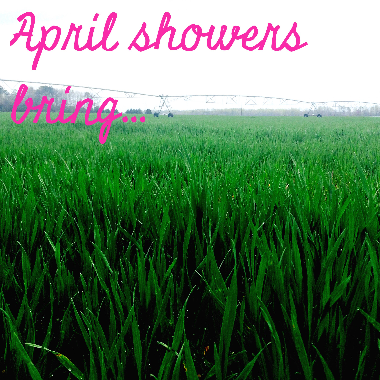April Showers Bring  The Good Stuff