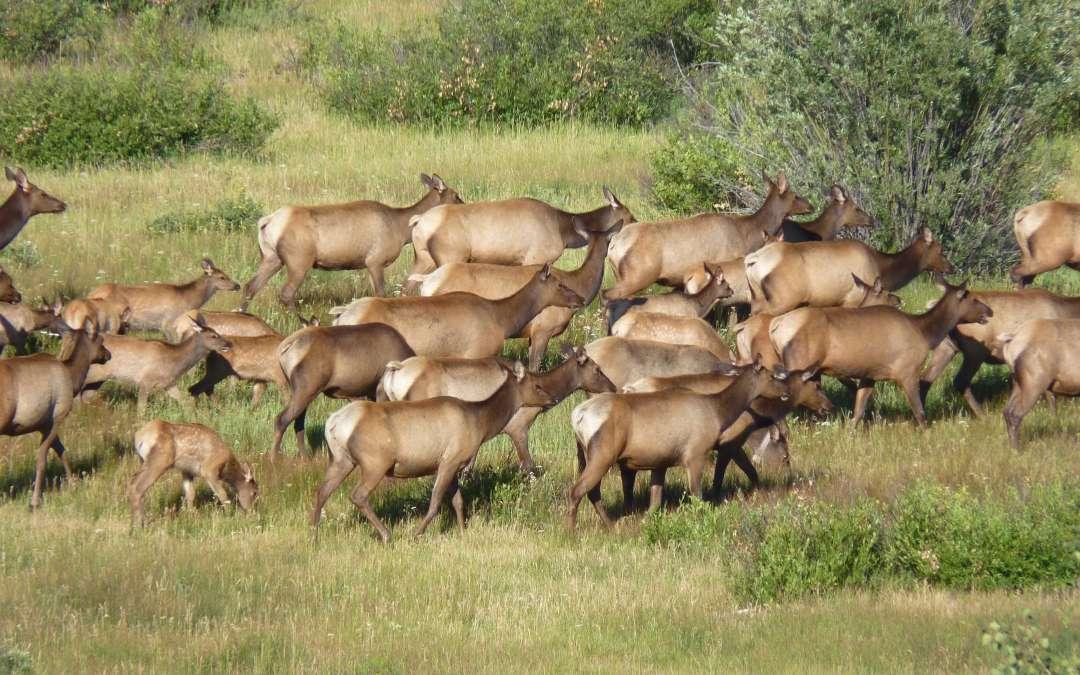 Yellowstone Wildlife Viewing & Photography