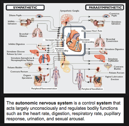 nervous system dial in