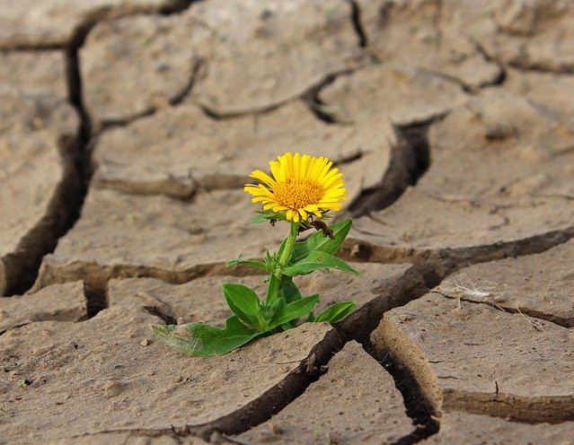 Blooming from the cracks
