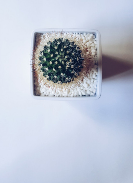 Prickly times