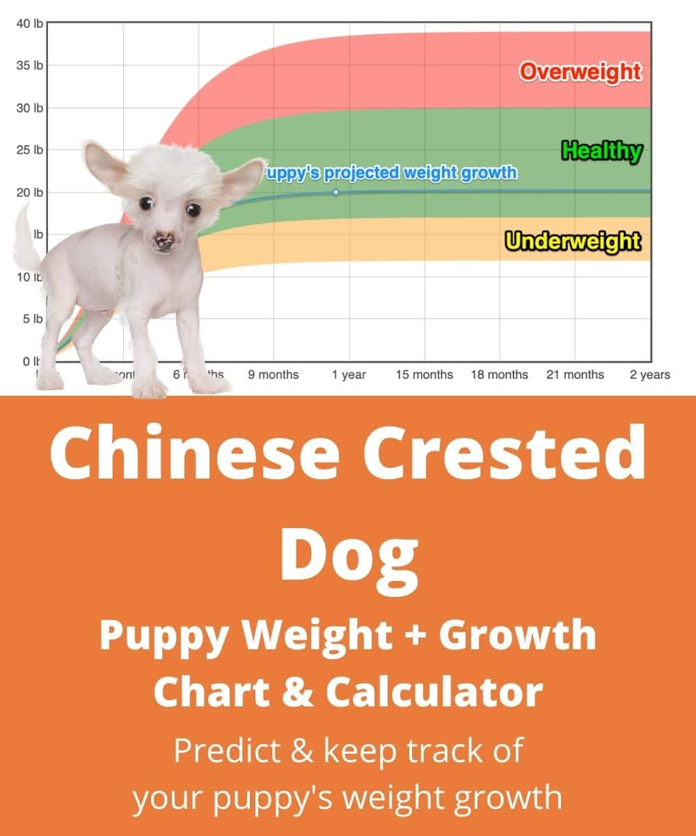 Chihuahua Puppy Weight Chart : chihuahua, puppy, weight, chart, Chinese, Hairless, Weight+Growth, Chart, Heavy, Weigh?, Goody