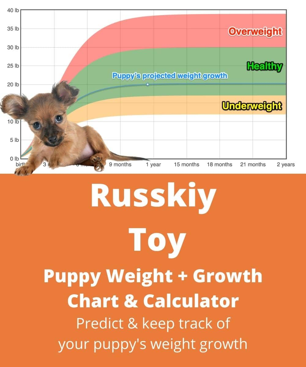 Chihuahua Puppy Weight Chart : chihuahua, puppy, weight, chart, Moscow, Terrier, Weight+Growth, Chart, Heavy, Weigh?, Goody