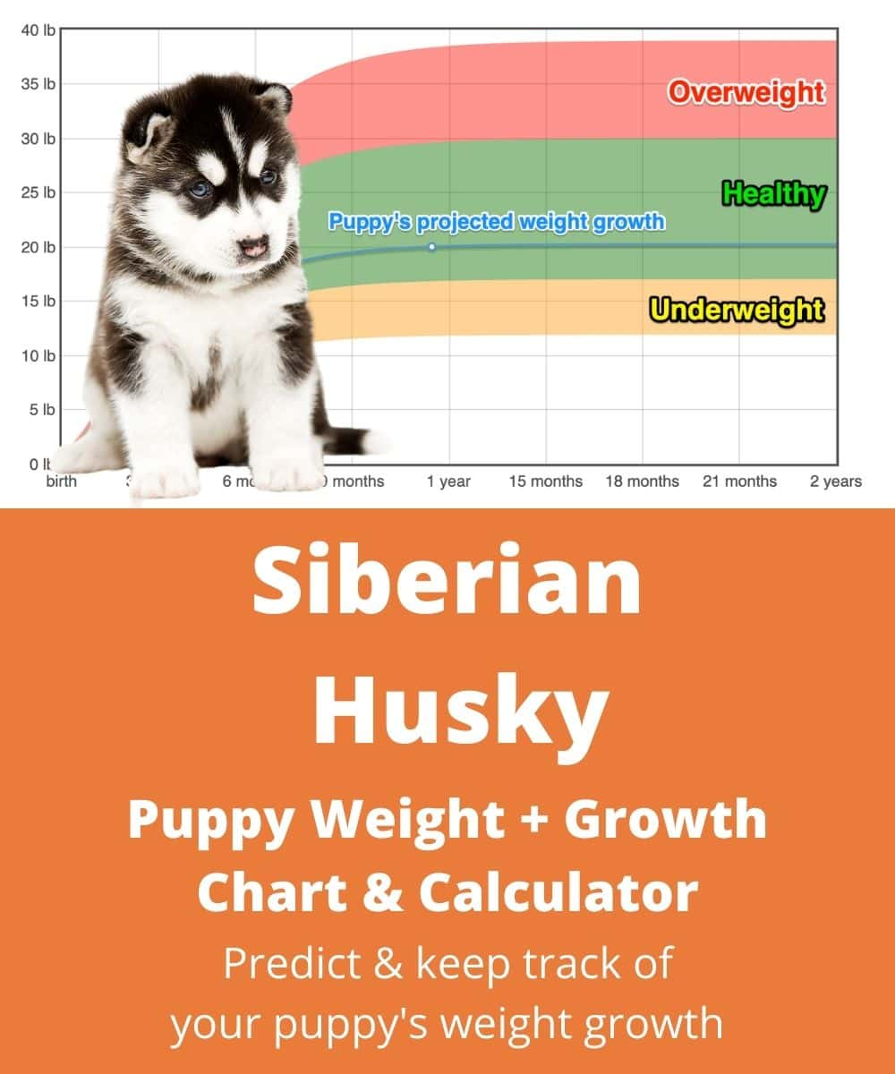 How Much Does A Sled Weigh : weigh, Chukchi, Weight+Growth, Chart, Heavy, Weigh?, Goody