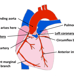 the main grooves of the heart are  [ 1280 x 720 Pixel ]