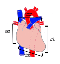 the heart is described as having four borders these are described below and are shown in the accompanying diagram  [ 1100 x 799 Pixel ]