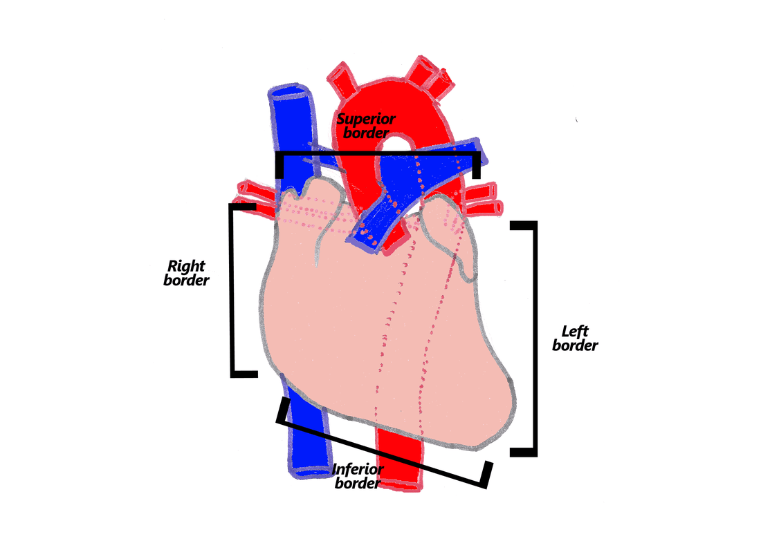 hight resolution of the heart is described as having four borders these are described below and are shown in the accompanying diagram