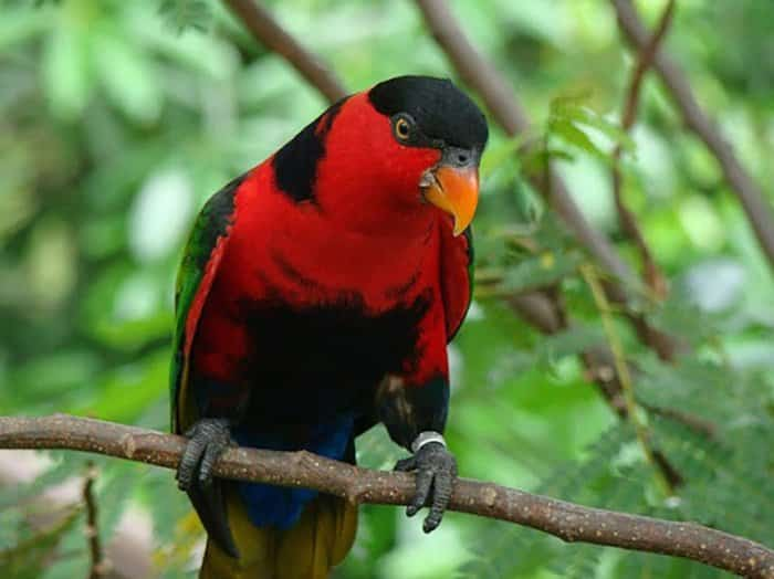 Fauna di wilayah Timur Indonesia