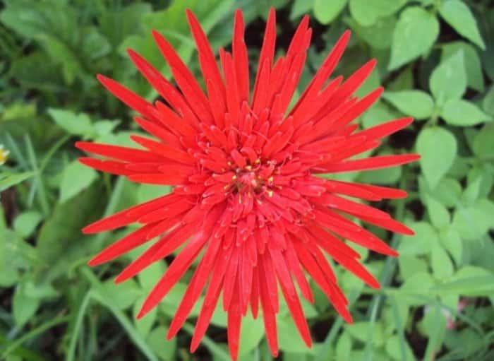 Gambar Bunga Herbras