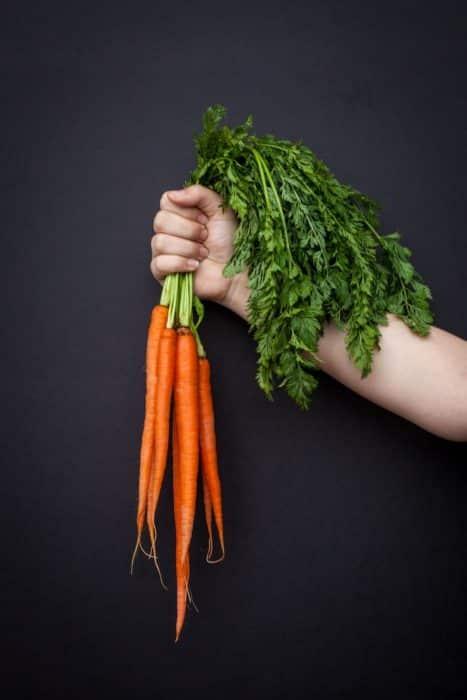 Klasifikasi Wortel : klasifikasi, wortel, Tanaman, Wortel, (Lengkap, Dengan, Kandungan,, Manfaat)