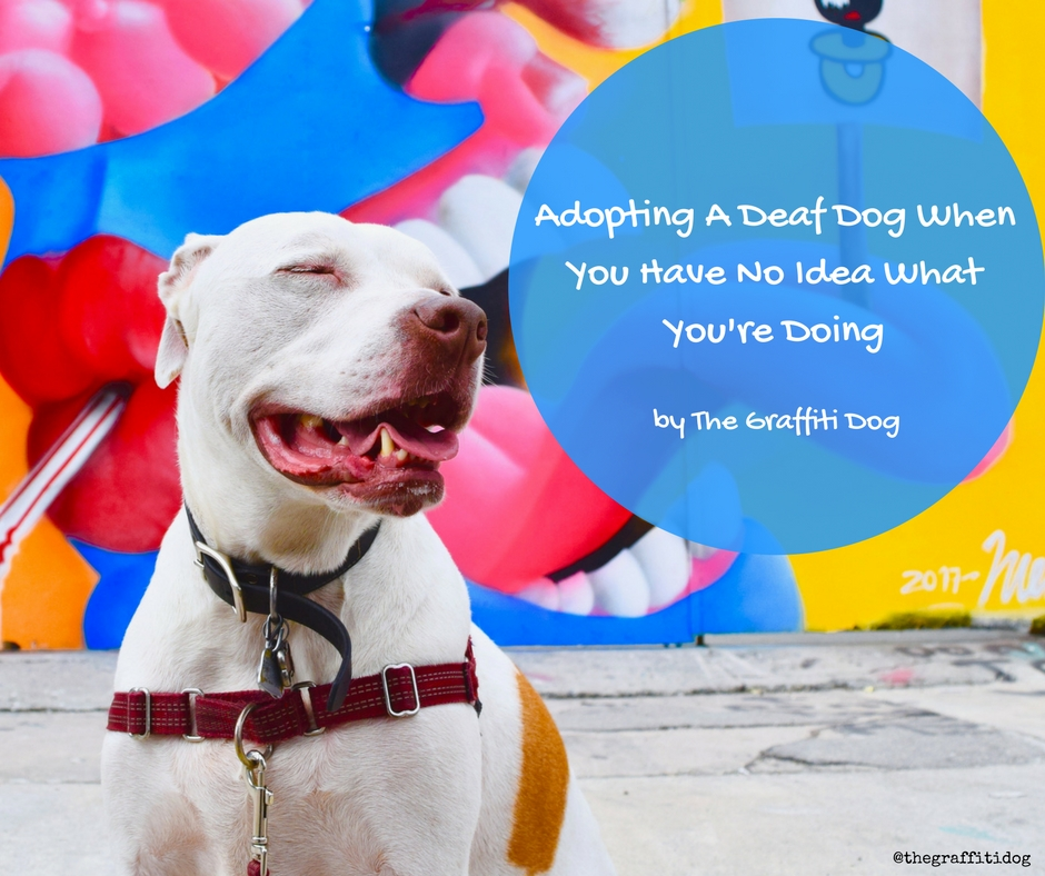 Adopting A Deaf Dog When You Have No Idea What Youre Doing