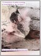 1971 Greenhorn d31 water crossing little deeper