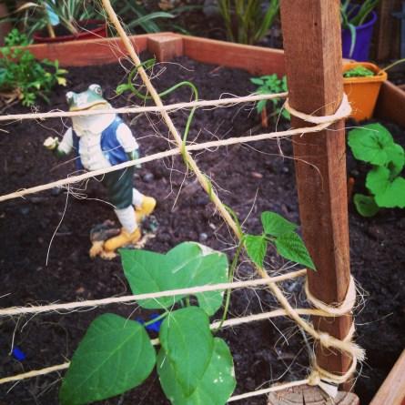 A little bean-stalk :)