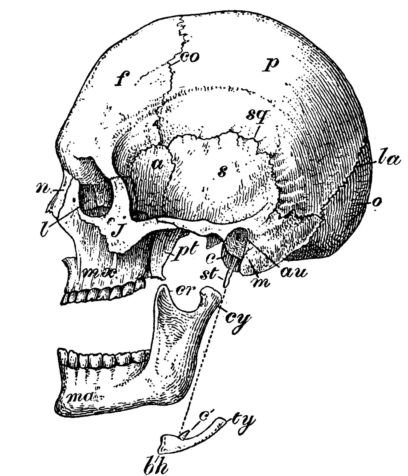 Of All 206 Bones Diagram