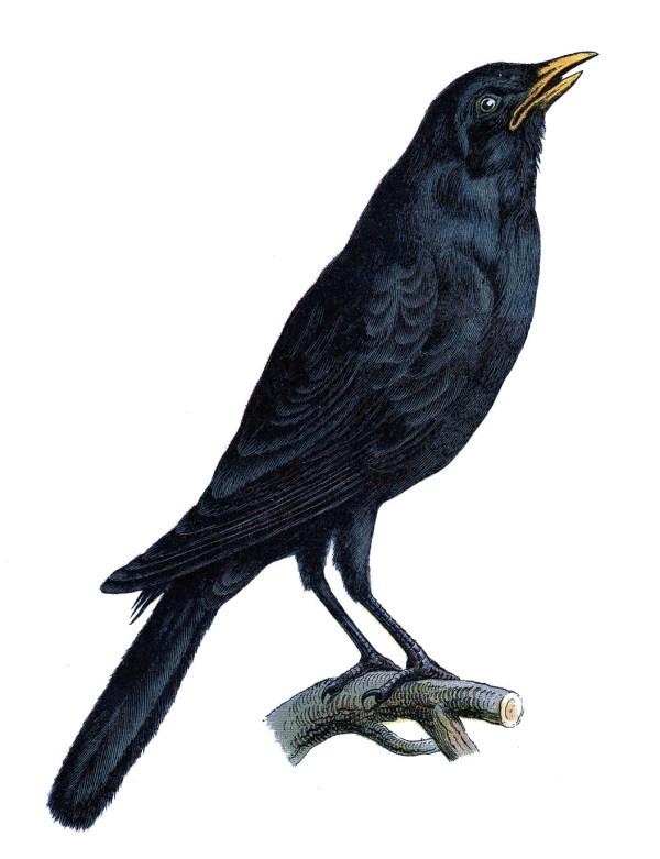vintage - crow halloween