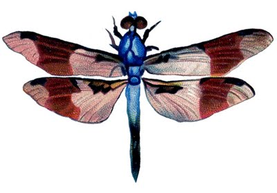 vintage clip art - colorful dragonfly