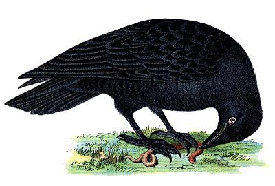 Vintage Halloween Clip Art  Raven  The Graphics Fairy