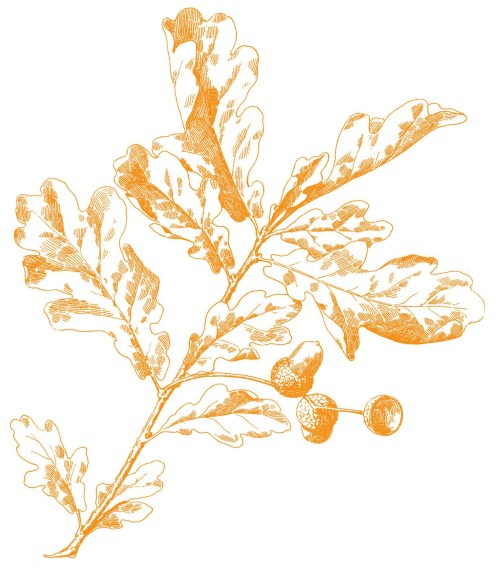small resolution of oak leaves image gold here is the gold version