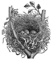 nest bird egg birds clip drawing printables graphics thegraphicsfairy printable clipart eggs fairy spring ephemera natural prints