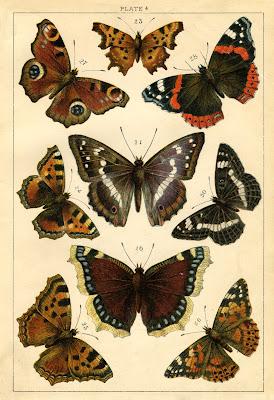 Animal Print Pink Wallpaper Instant Art Printable Antique Butterflies And Moths