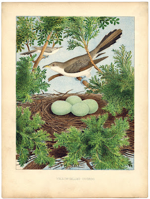 Instant Art Printable Beautiful Bird Nest Amp Eggs The