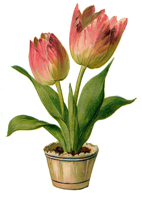 Vintage Clip Art Pretty Pink Tulips The Graphics Fairy