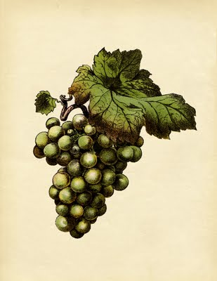 Instant Art Botanical Green Grapes The Graphics Fairy