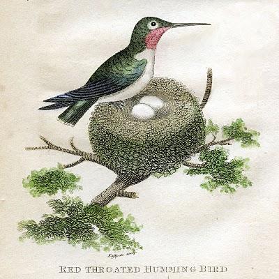 antique clip art - hummingbirds