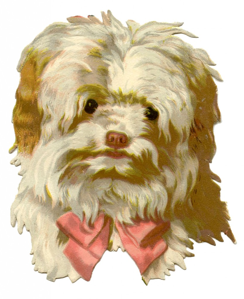 Vintage Dog Image Scruffy With Bow The Graphics Fairy