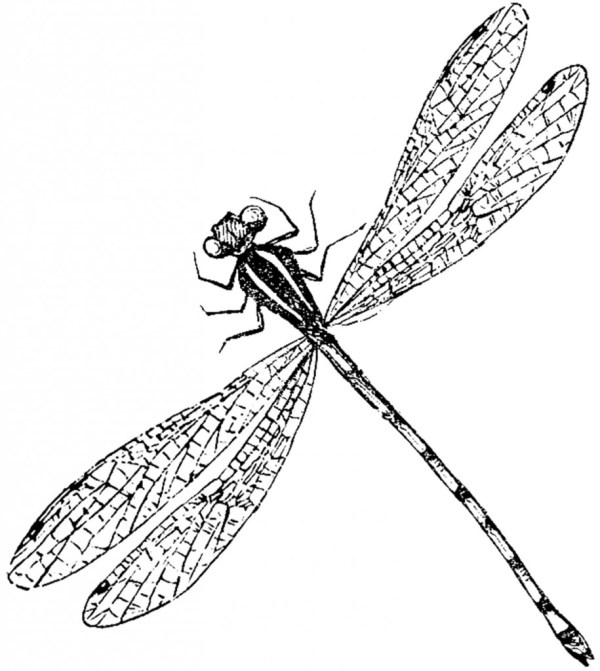 antique dragonfly - graphics