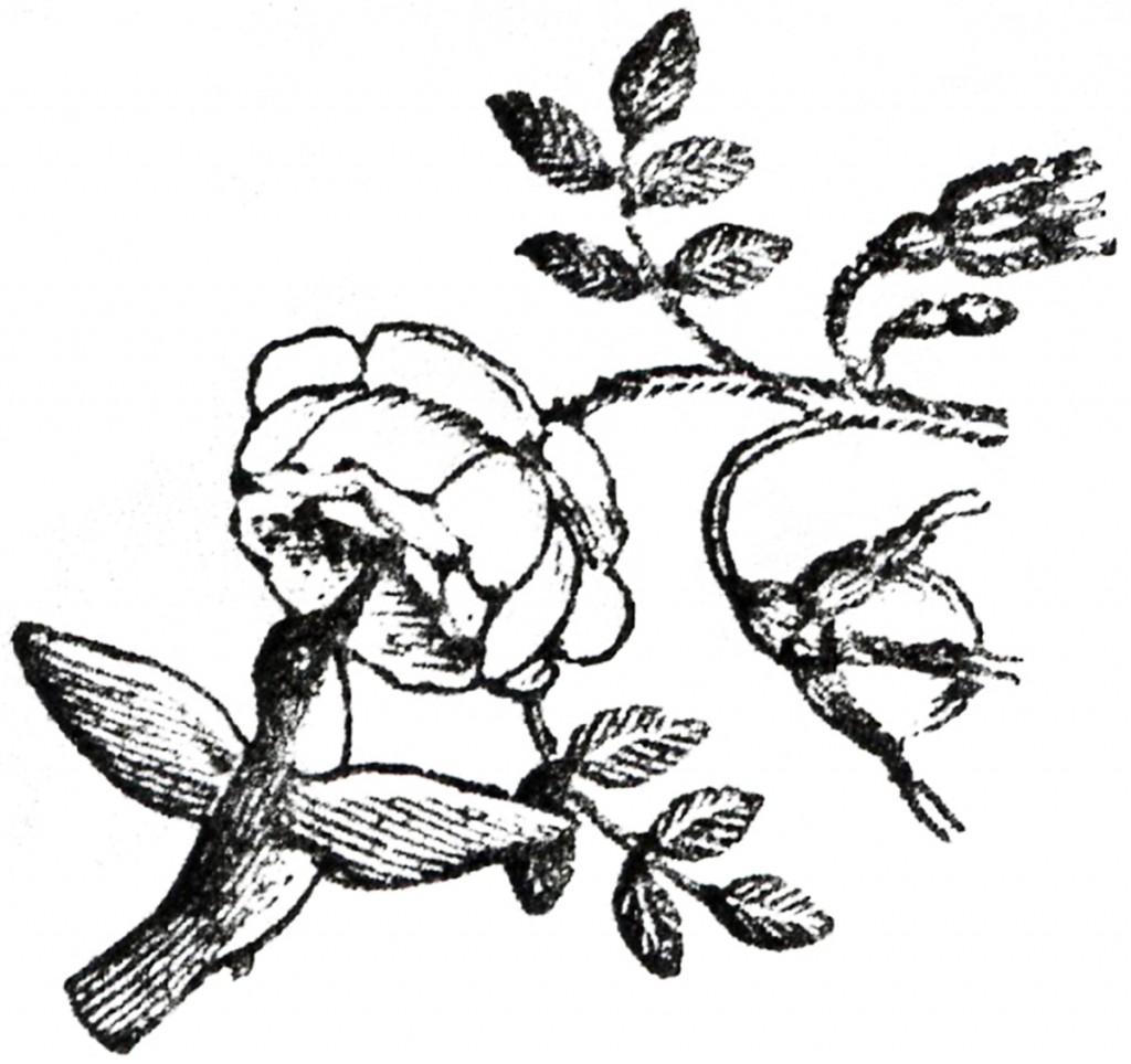 9 Hummingbird Graphics Images
