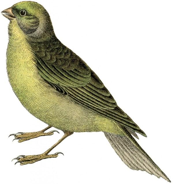 exceptional free vintage bird