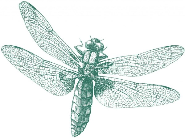 royalty free - dragonfly