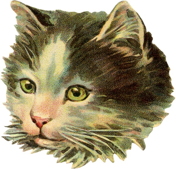 Vintage Cat Illustration - Graphics Fairy