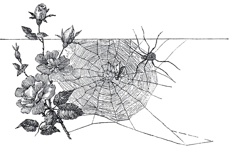 Free Spider Web Image