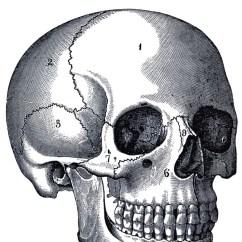 Anatomical Heart Diagram Single Phase Forward Reverse Wiring Vintage Anatomy Skull Image - The Graphics Fairy