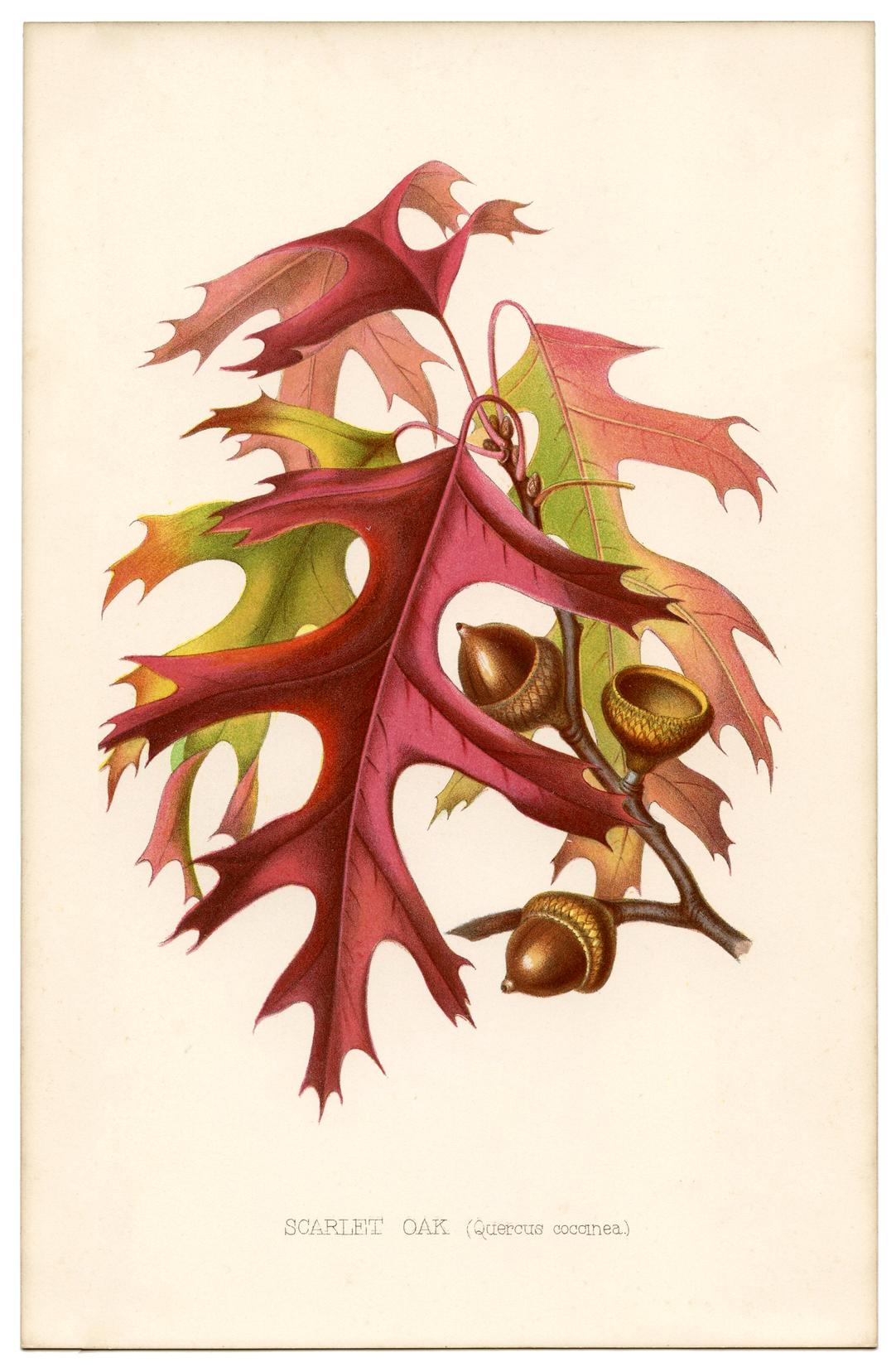 Fall Leaves Vintage Printable